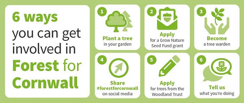 6 ways you can get involved in Forest for Cornwall